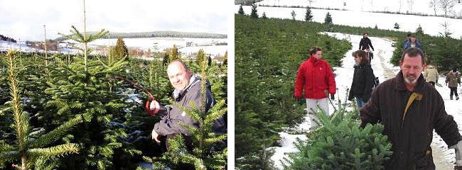 Weihnachtsbaum selber schlagen greifswald